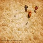 Grassland carpet