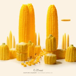 Corn City